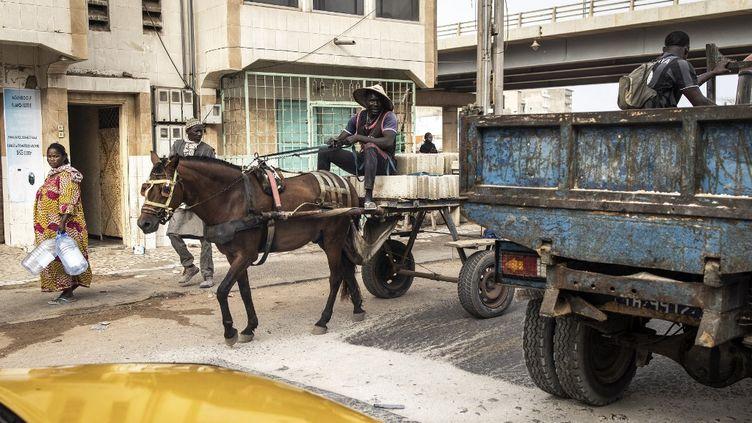 Dans les rues de Dakar, de plus en plus de charrettes tirées par des chevaux transportent des marchandises, mais aussi des passagers. (JOHN WESSELS / AFP)
