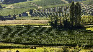 Les vignes AOC de Saussignac, le 13 août 2018, en Dordogne. (PHILIPPE ROY / PHILIPPE ROY)