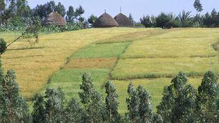 Terres agricoles dans la province éthiopienne de Shoa. L'Ethiopie fait partie des pays africains qui ont cédé de grandes superficies de terres agricoles aux investisseurs étrangers. (Photo AFP/Jean Pierre De Mann/Robert harding/Heritage)
