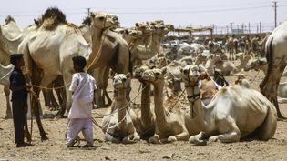 Des éleveurs avec leurs bêtes au marché aux chameaux d'el-Molih, à 100 km à l'ouest d'Omdurman, ville jumelle de la capitale soudanaise, le 10 juillet 2019. (ASHRAF SHAZLY / AFP)