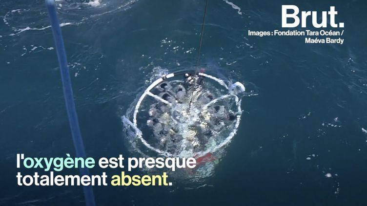 VIDEO. À bord du Tara où on étudie le peuple invisible de l'océan (BRUT)