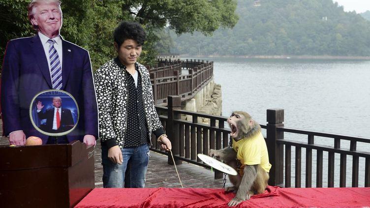 Dans la province de Hunan, en Chine, Geda le singe devin avait pronostiqué la victoire de Donald Trump. (STR / AFP)