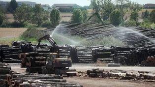 Pièces à conviction : la Chine importe massivement du bois français (France 3)