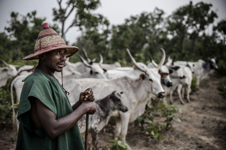 Un éleveur fulani avec son troupeau en avril 2019. (LUIS TATO / AFP)