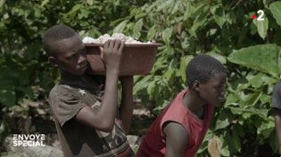 Cacao : les enfants pris au piège (ENVOYÉ SPÉCIAL  / FRANCE 2)