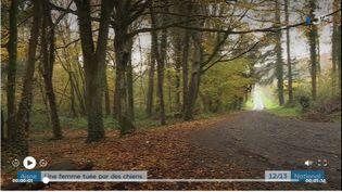 Elisa, 29 ans, a été tuée par des chiens dans une forêt de Retz, sur la commune de Saint-Pierre-Aigle (Aisne). Avant de mourir, la jeune femme avait appelé son compagnon. Christophe a accepté de témoigner. (France 3)