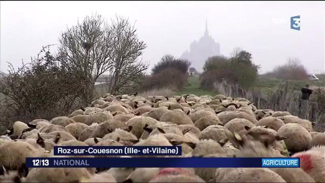 À la rencontre des éleveurs d'agneaux pascal