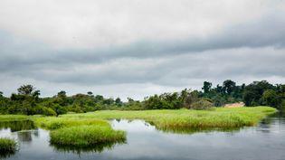 Vue des marais de la rivière Likouala-aux-herbes, au nord de la République du Congo. (GUYOT-ANA / ONLY WORLD)