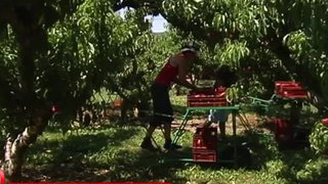 Dans la Drôme, les agriculteurs s'organisent face à la chaleur.
