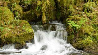 Bienvenue dans la vallée de la Gourgue d'Asque, qui abrite une grande forêt sauvage digne d'une jungle. (Office de tourisme des Hautes-Pyrénées)