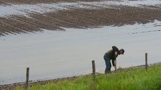 Un agriculteur s'occupe d'un champ de maïs, le 21 mai 2013 à Angers (Maine-et-Loire). ( MAXPPP)