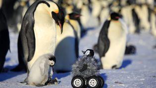 Une photo du robot utilisé par une équipe scientifique pour approcher des manchots en Antarctique, publiée le 1er novembre 2014. (NATURE METHODS / AFP)