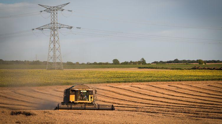 Les moissons ont commencé dans la Nièvre, comme ici près de La Charité-sur-Loire, le 8 juillet 2020. (PIERRE DESTRADE / MAXPPP)