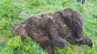Lecadavre d'un ours découvert dans en Ariège / ©Twitter Elisabeth Borne. (Twitter Elisabeth Borne)