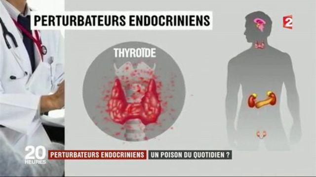 Enquête sur les perturbateurs endocriniens