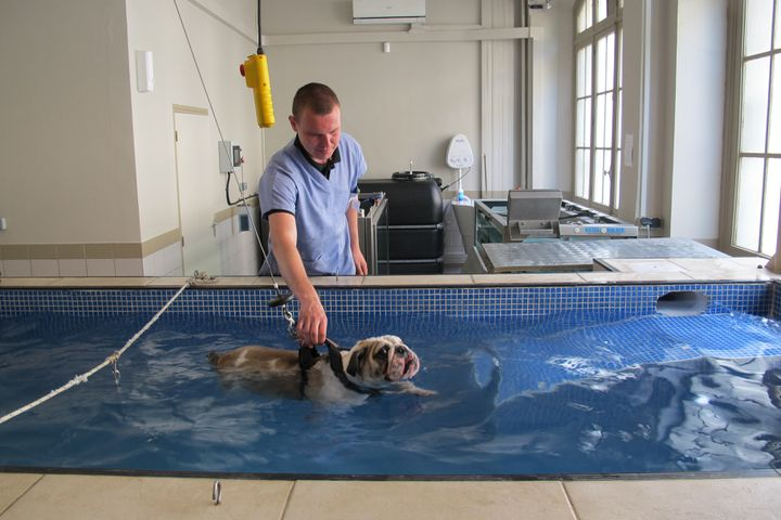Hydrotherapie Animale Quand Chiens Et Chats Se Mouillent Pour Leur Sante