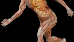 """Le corps humain est un """"bricolage"""" pour Michel Serres. (GETTY IMAGES)"""