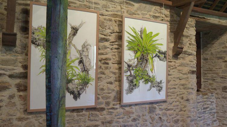 """Une oeuvre de l'exposition """"Forest Art Project"""" à Caen. (FRANCEINFO)"""