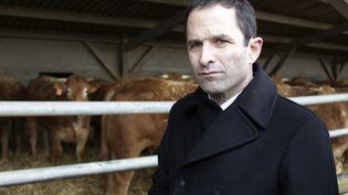 Benoît Hamon défend une transition écologique d'ici 2025, lors d'une visite dans une ferme bio de Seine-et-Marne en février 2017. (PASCAL LACHENAUD / AFP)