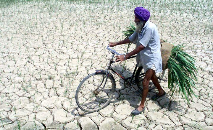 Un fermier sikh traverse un champ de paddy affecté par la sécheresse (Nord du Penjab) (Reuters/STR New)