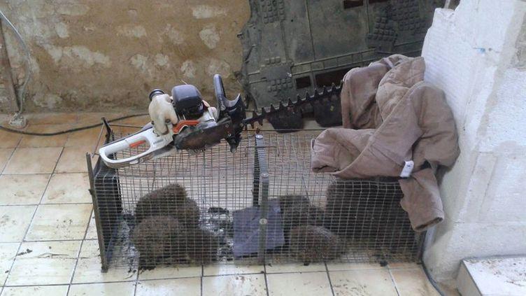 Lors d'une perquisition, les gendarmes ont découvert une cage contenant treize hérissons. (GENDARMERIE NATIONALE)