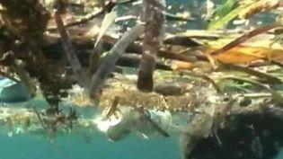 Les sacs plastiques sont un fléau pour les océans. ( CAPTURE ECRAN FRANCE 3)