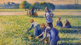 """""""La Cueillette des Pois"""" de Camille Pissarro (1887) (DOMAINE PUBLIC)"""