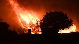 Les flammes continuent leurs ravages près de Vitrolles (Bouches-du-Rhône), dans la nuit du 10 août 2016. (BORIS HORVAT / AFP)