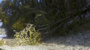 Les chutes de neige jeudi 14 novembre dans plusieurs départements ont fait une victime : un homme de 63 ans est décédé dans le nord de l'Isère. (France 2)