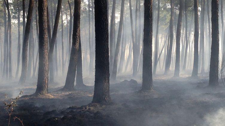 Une zone forestière brûlée, à Pessac, près de Saint-Jean-d'Illac, en Gironde, le 26 juillet 2015. (MEHDI FEDOUACH / AFP)