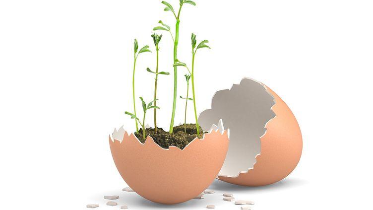 Un œuf, du coton ou de la terre, quelques lentilles et le tour est joué ! (ISABELLE MORAND / DIMITRI KALIORIS / RADIO FRANCE / FRANCE INFO)