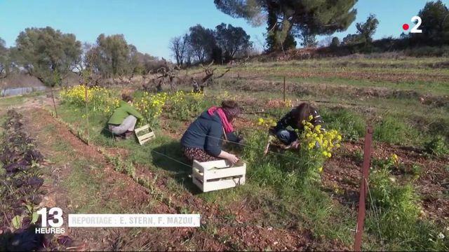 Tendance : les agriculteurs s'installent aux portes des villes
