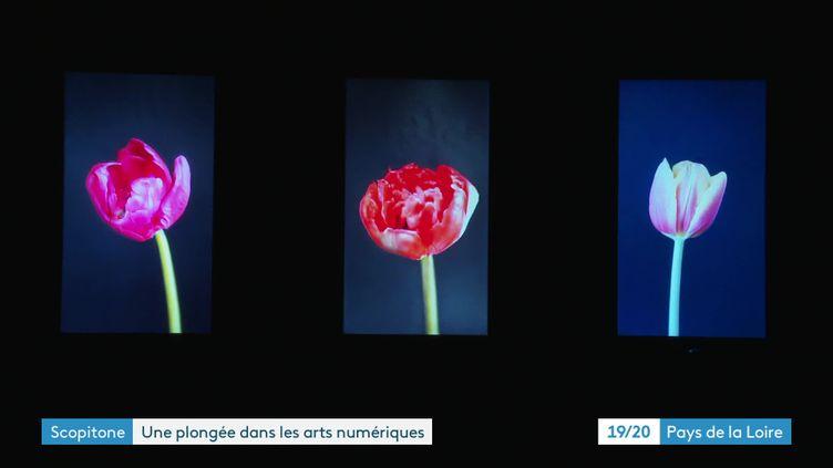 """Exposition """"hyper nature"""" au festival Scopitone à Nantes (France 3 Pays de la Loire)"""