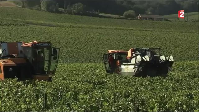 Charente : les vendanges avancées suite aux orages