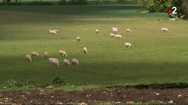 Loi alimentation : les agriculteurs ne sont pas convaincus