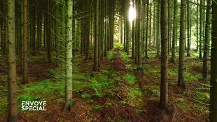 Le monde secret des arbres (CAPTURE ECRAN / ENVOYE SPECIAL / FRANCE 2)