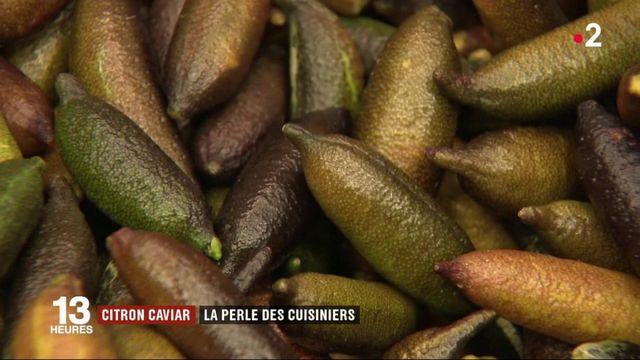 Gastronomie : le citron caviar, la perle des cuisiniers