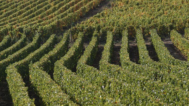 Des vignes en Bourgogne. Photo d'illustration. (  MAXPPP)