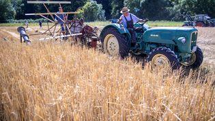 Des agriculteurs cultivent duseigle à Lübeck (Allemagne), le1er août 2020. (JENS BUTTNER / DPA-ZENTRALBILD / AFP)