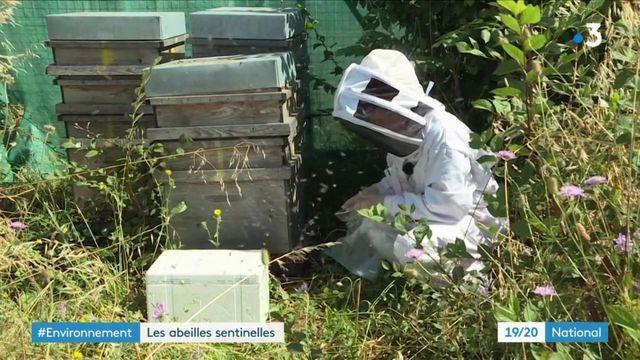 Charente-Maritime : quand des abeilles controlent la qualité de l'air