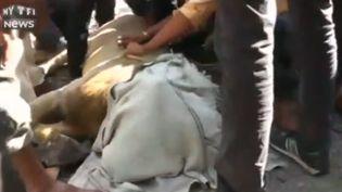 Un lion, ici avec une couverture sur la tête, a été sauvé par des passants alors qu'il risquaitde se noyer dans une zone portuaire d'Amreli (Inde), le 2 janvier 2016. (MY TF1 NEWS)