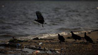 Des oiseaux se nourrissent parmis les déchets de la plage de Bica, sur la baie de Guanabara de Rio (Brésil), le 25 mars 2015. (RICARDO MORAES / REUTERS)