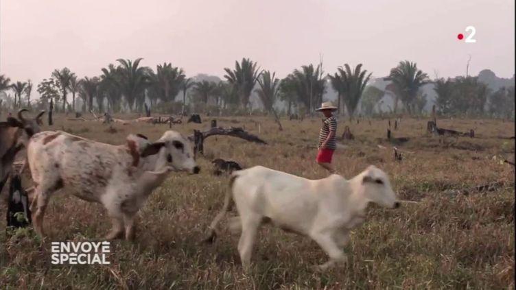 Pourquoi cet éleveur brésilien va continuer à mettre le feu à la forêt amazonienne (ENVOYÉ SPÉCIAL  / FRANCE 2)