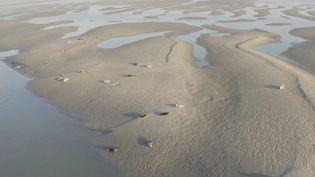 Dans la baie de Somme, les touristes découvrent les phoques dans leur milieu naturel. (CAPTURE ECRAN FRANCE 2)