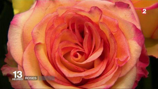 Saint-Valentin : comment choisir ses roses ?