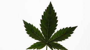 Une feuille de cannabis à esvres, près de Tours (d'Indre-et-Loire), le 4 janvier 2013. (ALAIN JOCARD / AFP)