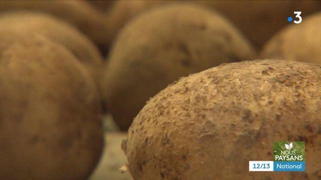 Agriculture : les Pépites de l'Aubrac, des pommes de terre d'exception