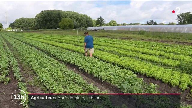 Agriculture : les récoltes subissent les affres du mauvais temps