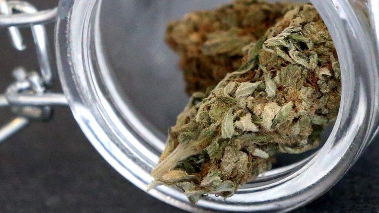 Selon l'addictologue William Lowenstein, l'économie du cannabis représenterait pour les agriculteursjusqu'à200000 emplois. (LIONEL VADAM / MAXPPP)