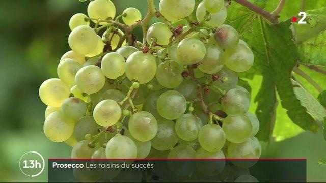 Italie : le territoire du prosecco classé à l'Unesco
